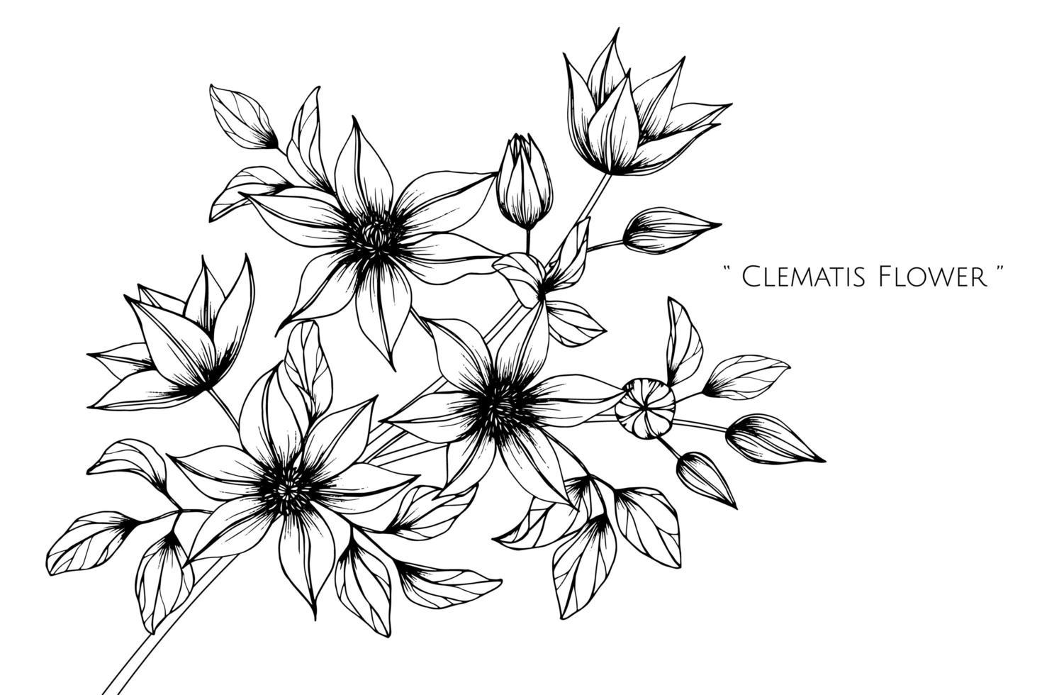 handgezeichnete Clematis Blumen- und Blattentwurf vektor