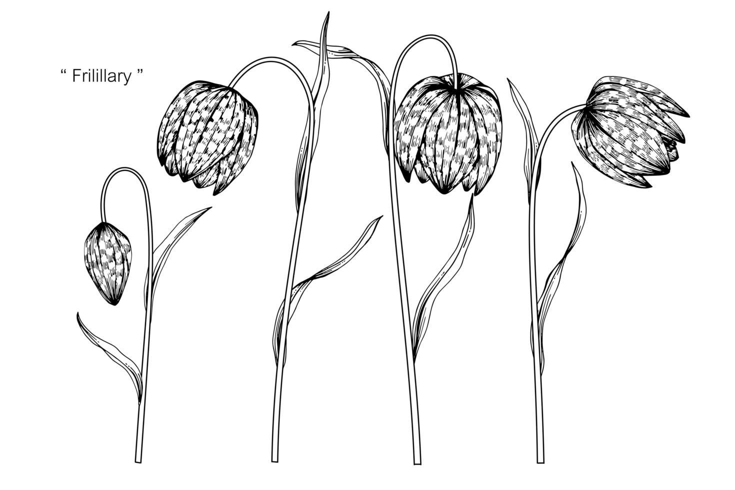 fritillaria blomma blad handritad design vektor