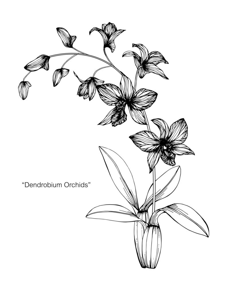 orkidé blomma blad handritad design vektor