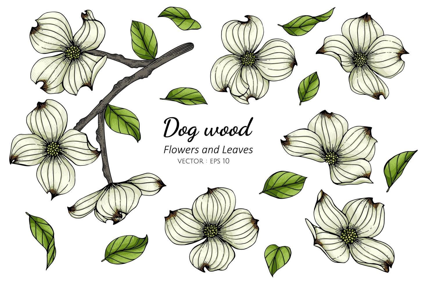 handgezeichnete weiße Hartriegelblumen und -blätter vektor