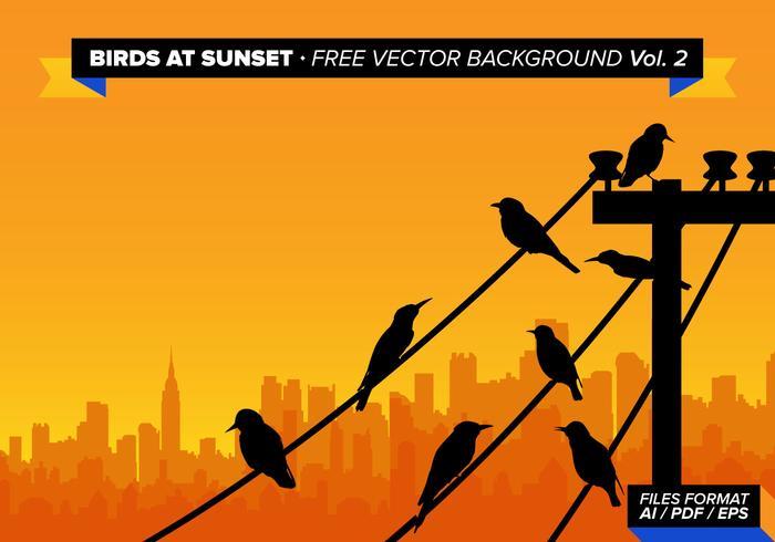 Vögel am Sonnenuntergang Freier Vektor Hintergrund Vol 2