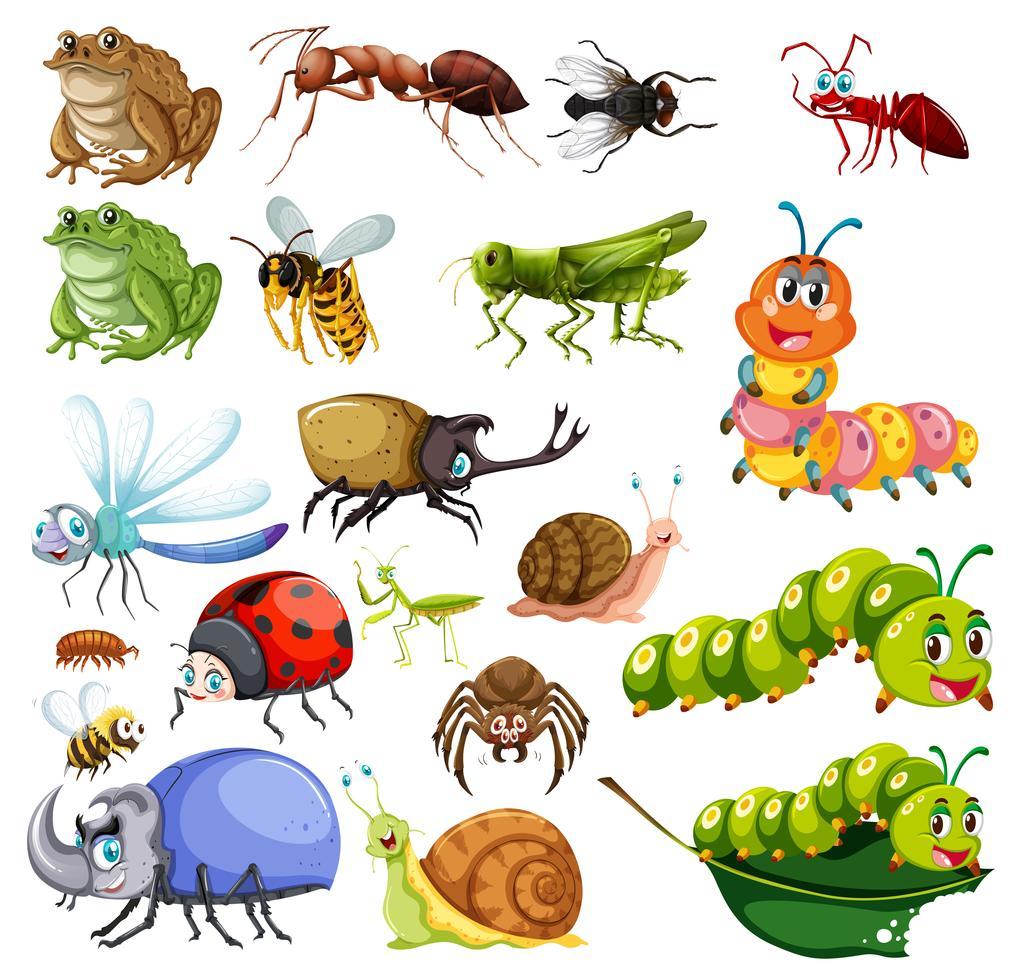 verschiedene arten von insekten  download kostenlos