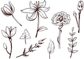 Freie Blumenvektoren