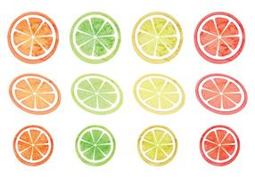 Vector Set von Zitrusfrüchten