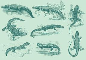 Eidechsen und Alligatoren vektor