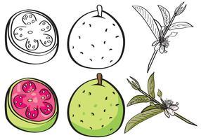 Guave Set vektor