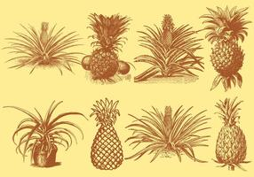 Alte Stil Zeichnung Ananas vektor