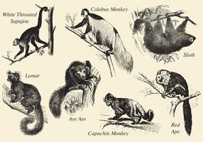 Alte Stil Zeichnung Säugetiere vektor