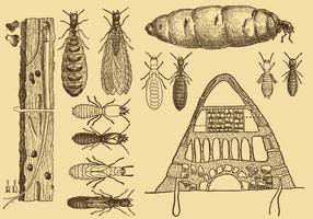 Old Style Drawing Termite Vektoren