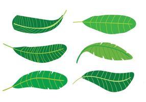 Bananen-Blatt-Vektoren vektor