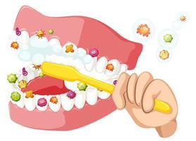 Zähne putzen und Bakterien entfernen vektor