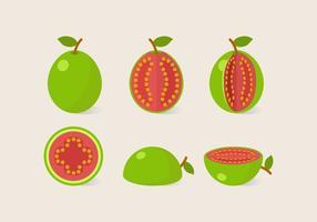 Vektor guava