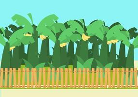 Banan Träd Vector