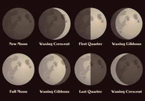 Mondphasen Vektor