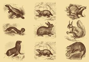 Alte Stil Zeichnung Säugetier Vektoren