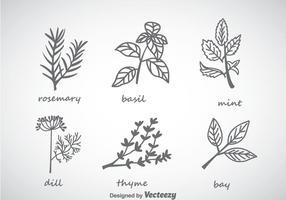 Örter och kryddor samling vektor