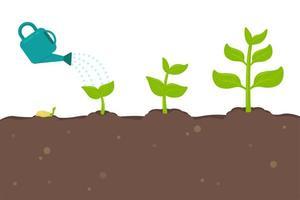 Pflanzen, die aus Samen sprießen vektor