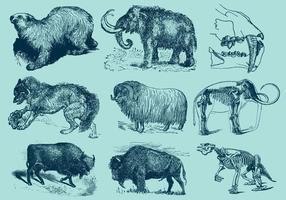 Eiszeit Tiere vektor