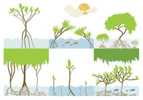Mangrove Ecosystems Vektor