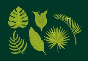 Vektor Blätter