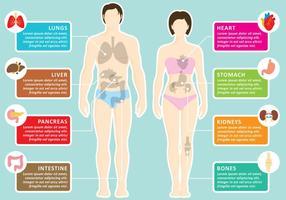 Menschliche Organe Infografie vektor