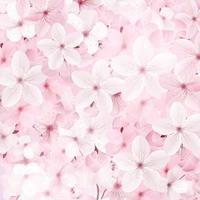blommande rosa sakura blommor bakgrund. vektor