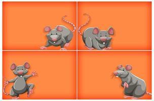 orange Hintergrund mit grauer Maus eingestellt vektor