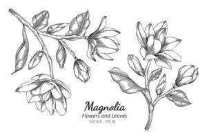 magnolia blommor och blad linje ritning