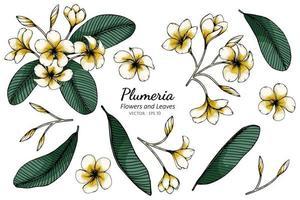 Satz Plumeria Blumen und Blätter Zeichnung vektor