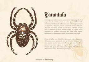 Kostenlose Tarantula Vektor-Illustration