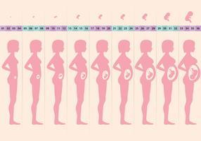 Schwangerer Zyklus