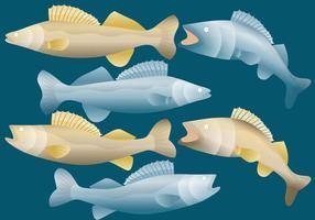 Walleye fiskvektorer vektor