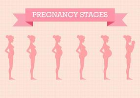 Kostenlose Schwangerschaft Stufen Vektor