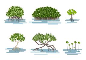 Freien Mangrove-Vektor