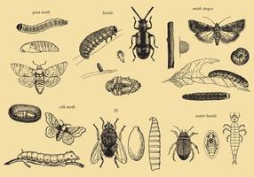 Insektenvektoren aufwachsen vektor