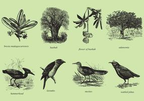 Madagaskar Bäume und Vögel vektor