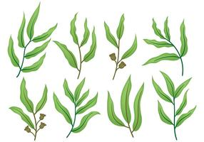 Kostenlose Eukalyptus Icons Vektor