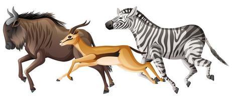 Gruppe von afrikanischen Savannentieren, die laufen