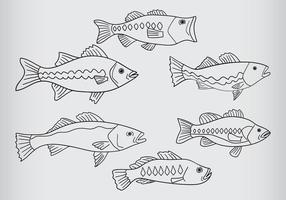 Bass Fische Vektor