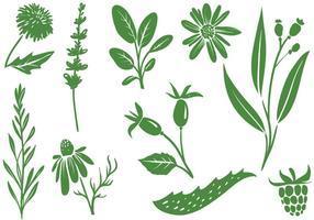 Freie Heilpflanzen Vektoren