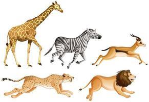 uppsättning safaridjur på vit bakgrund