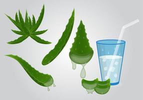 Färsk hälsosam Maguey Drink Vector