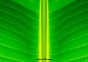 Grön Blad Bakgrund - Vektor