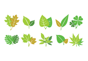 Grüne hojas sammlung vektor