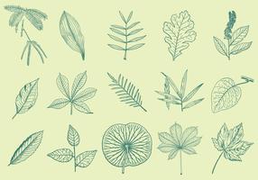 Blätter Zeichnungen vektor