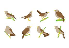 Kostenlose Nightingale Vektor