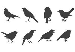 Kostenlose Nightingale Vektoren