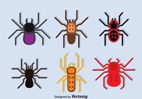Tarantula Sammlung Vektor