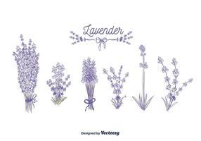 Lavendelvektor vektor