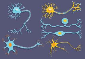 Neuronvektor vektor